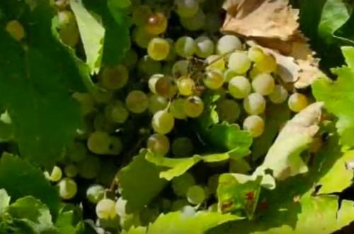 Los vinos de Terrer y el mejor Cava del mundo