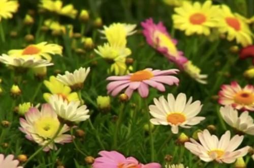 Mercabarna Flor