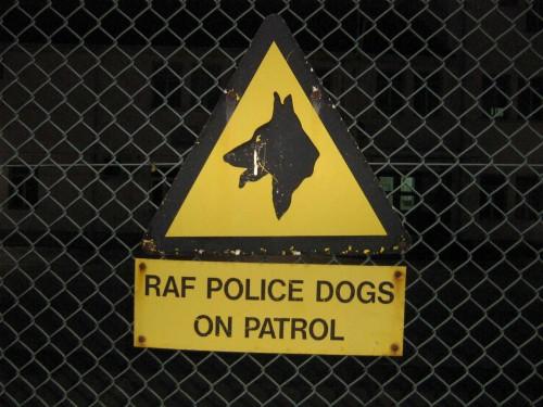 Dogs (Gibraltar)