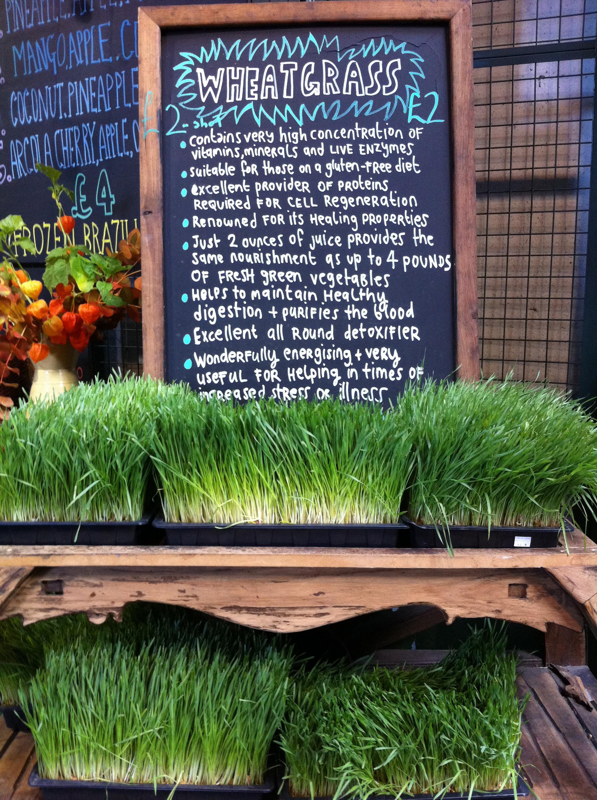 Wheat grass (London)