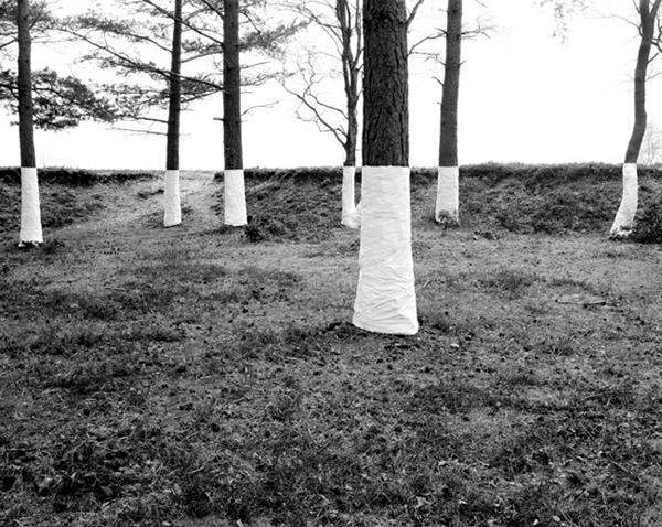 Zander Olsen  y su arte en el horizonte