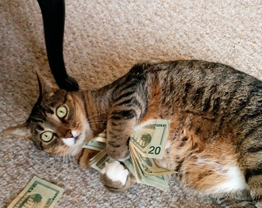 @cashcats