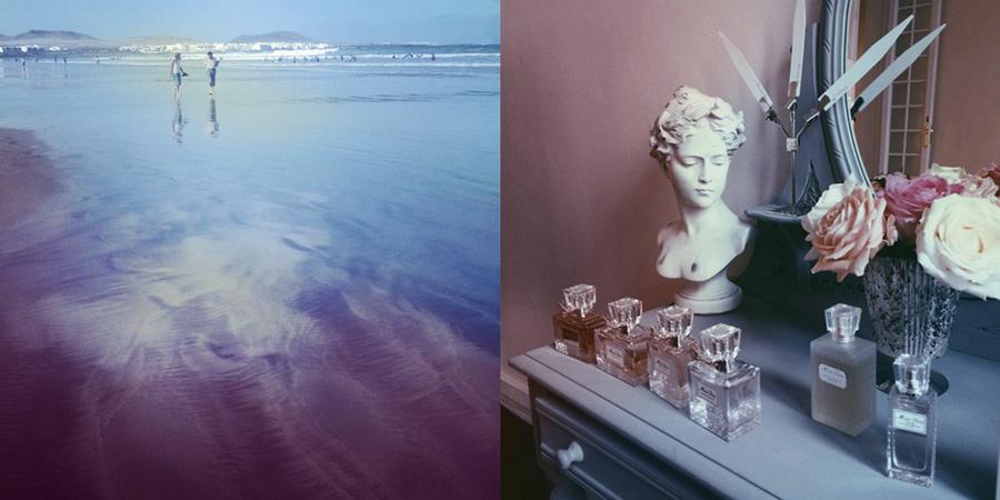 rose-serenity-tendenciastv