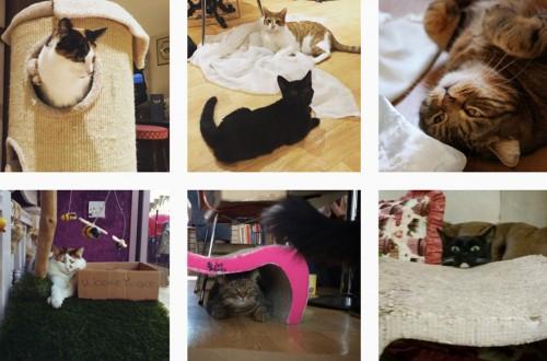 Lady Dinah's: el emporio de los felinos