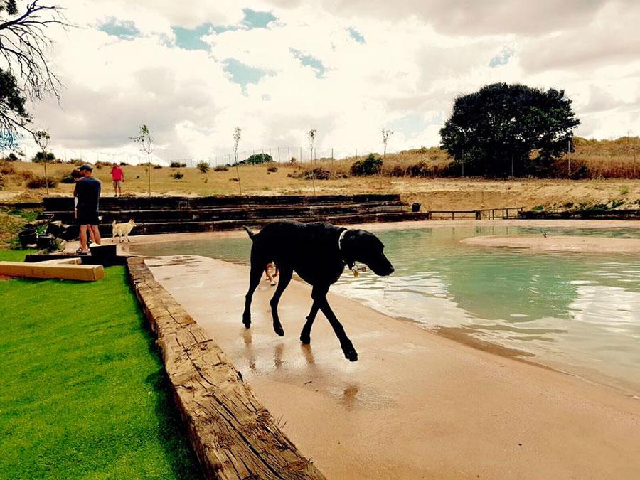 Campus Perruno: la primera piscina para perros en Madrid