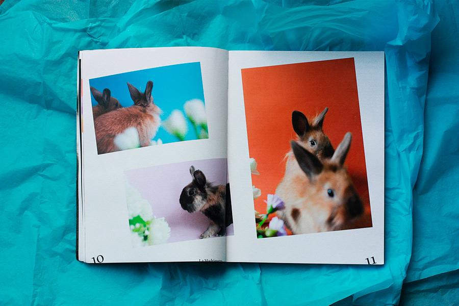 agaopornis-magazine-la-madriguera