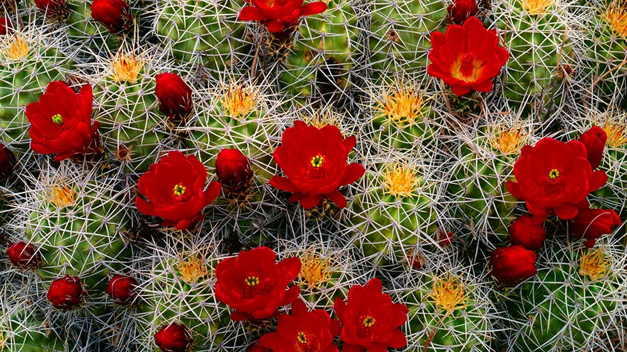 cactus-plantnet-portada-a