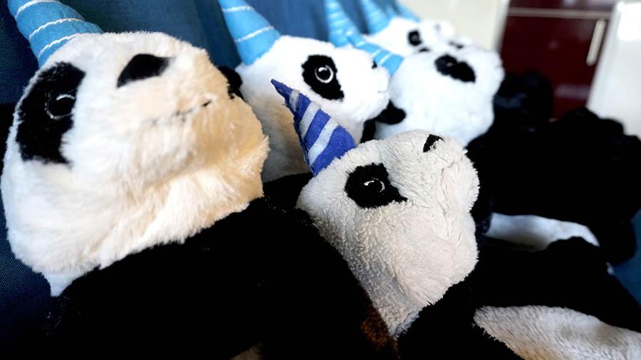 Belena Gaynor pandacornios