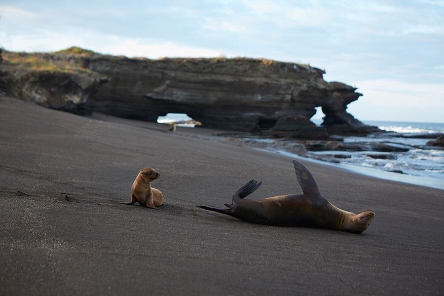 Eldorado Galapagos focas