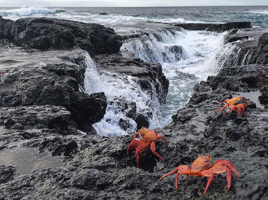 Eldorado Galapagos