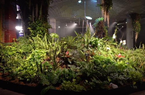 The Lowline Nueva York