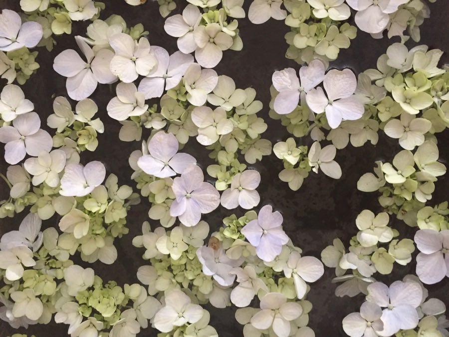 proyecto las flores del tiempo