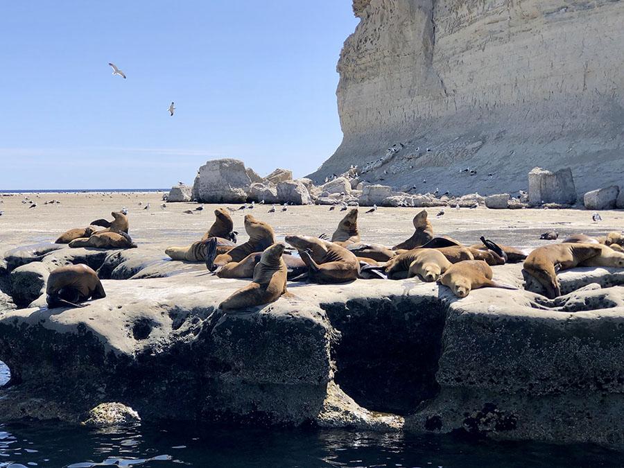 Océano Patagonia