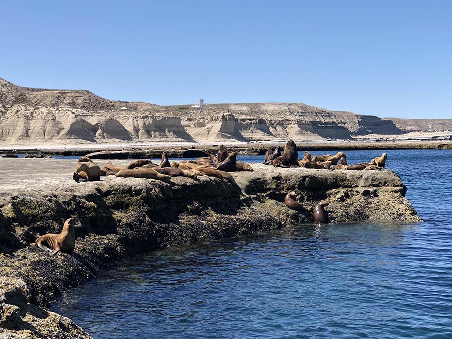 oceano patagonia peninsula valdes