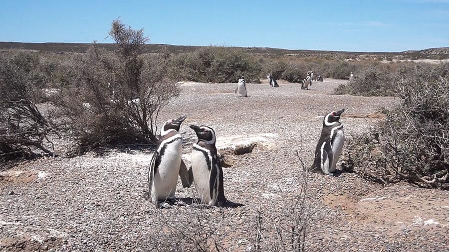 oceano patagonia pinguinos