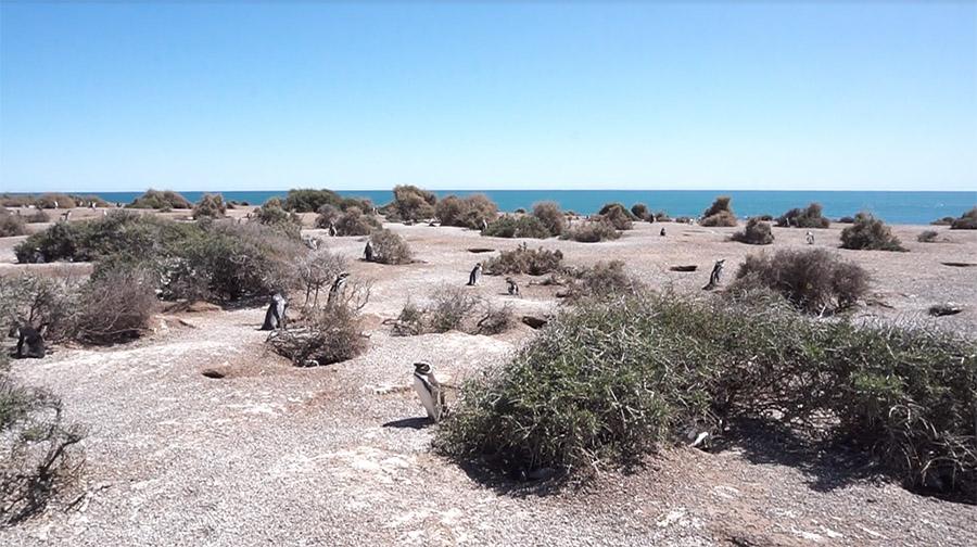 Océano Patagonia peninsula valdes