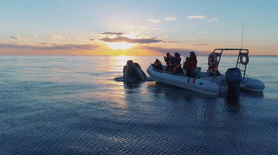 oceano patagonia botazzi