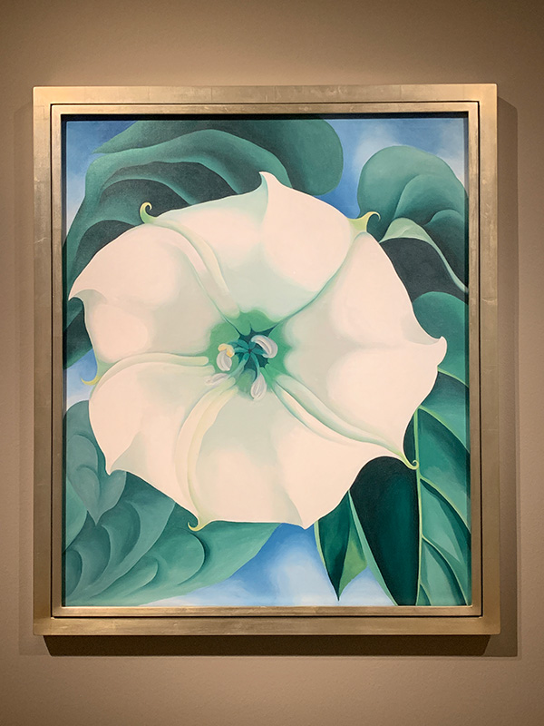 Georgia O'Keeffe flor